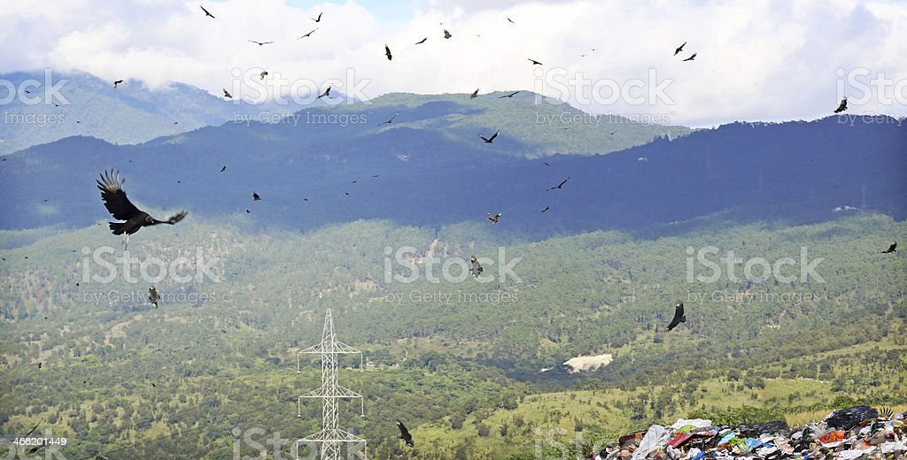 Vultures at the Dump royalty-free stock photo
