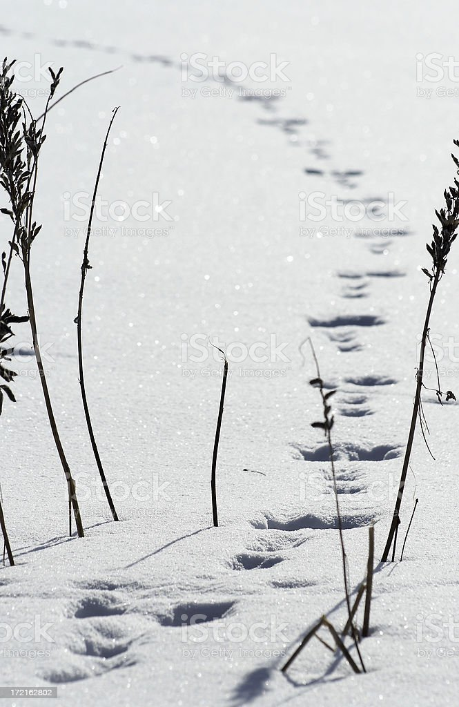 Wabbit was here royalty-free stock photo