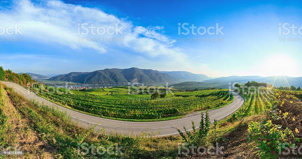 Wachau valley vineyards panorama, Weissenkirchen, Austria stock photo