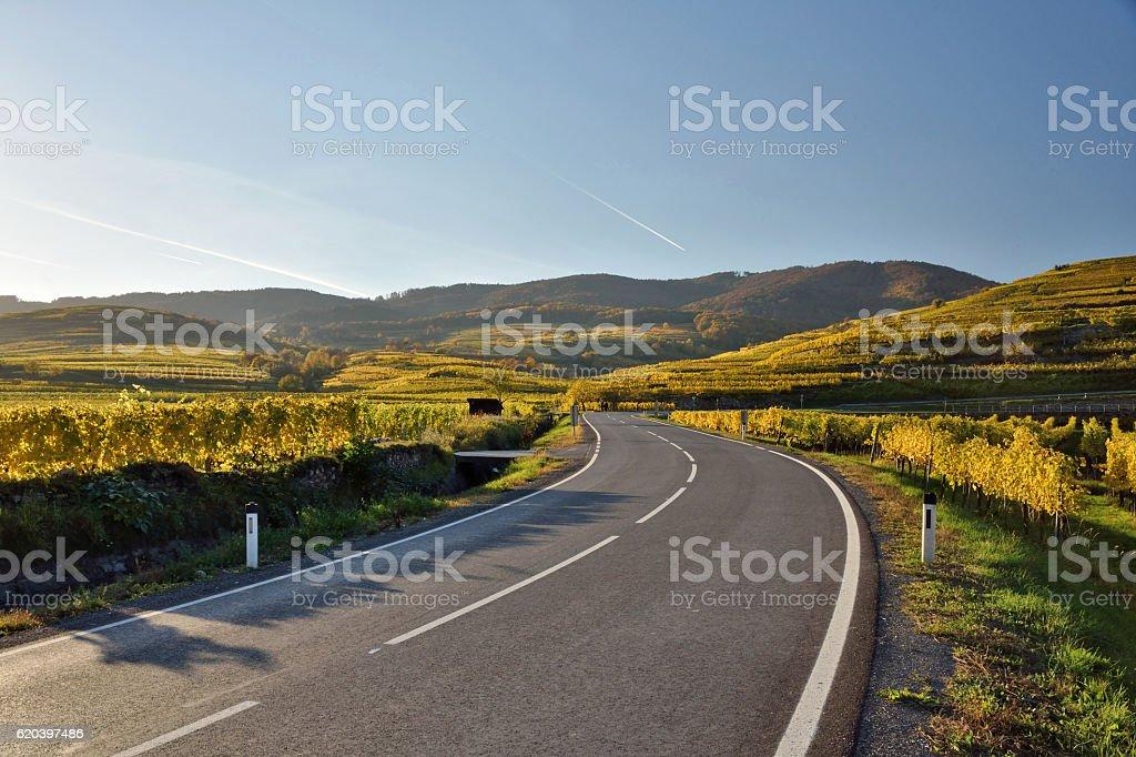 Wachau vineyards in fall stock photo