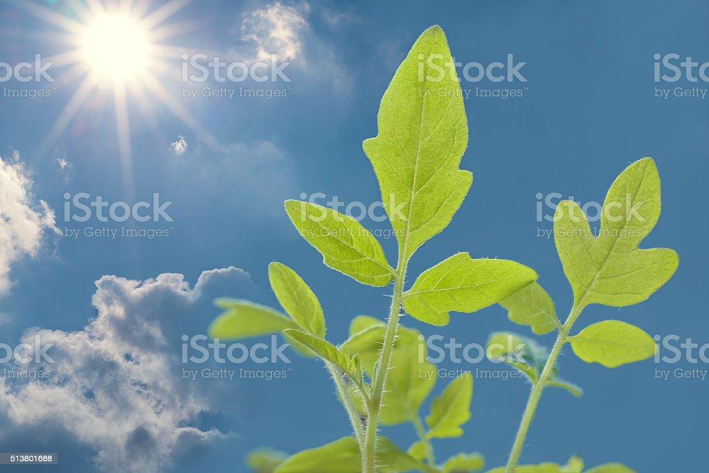 Wachstum stock photo