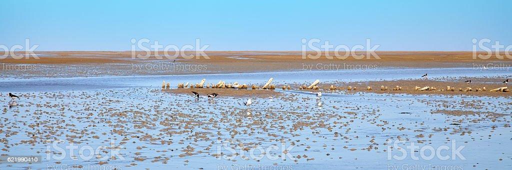 wadden sea stock photo
