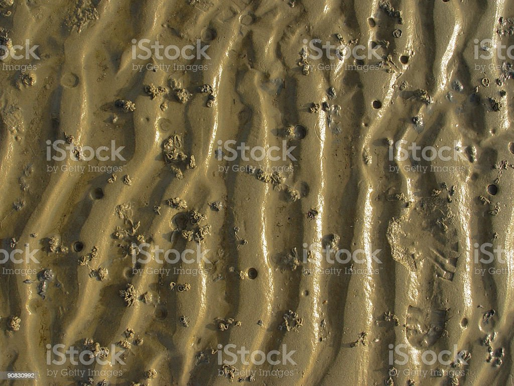 Wadden Sea royalty-free stock photo