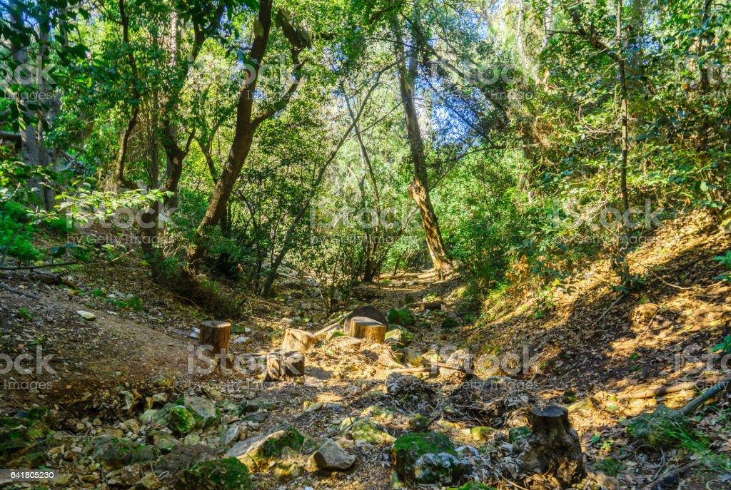 Wadi Lotem in Haifa stock photo