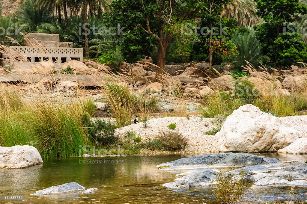 Wadi Tiwi royalty-free stock photo