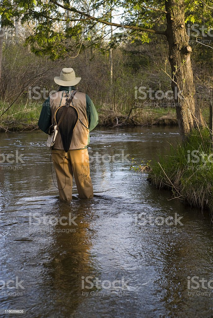 Wading a Trout Stream royalty-free stock photo