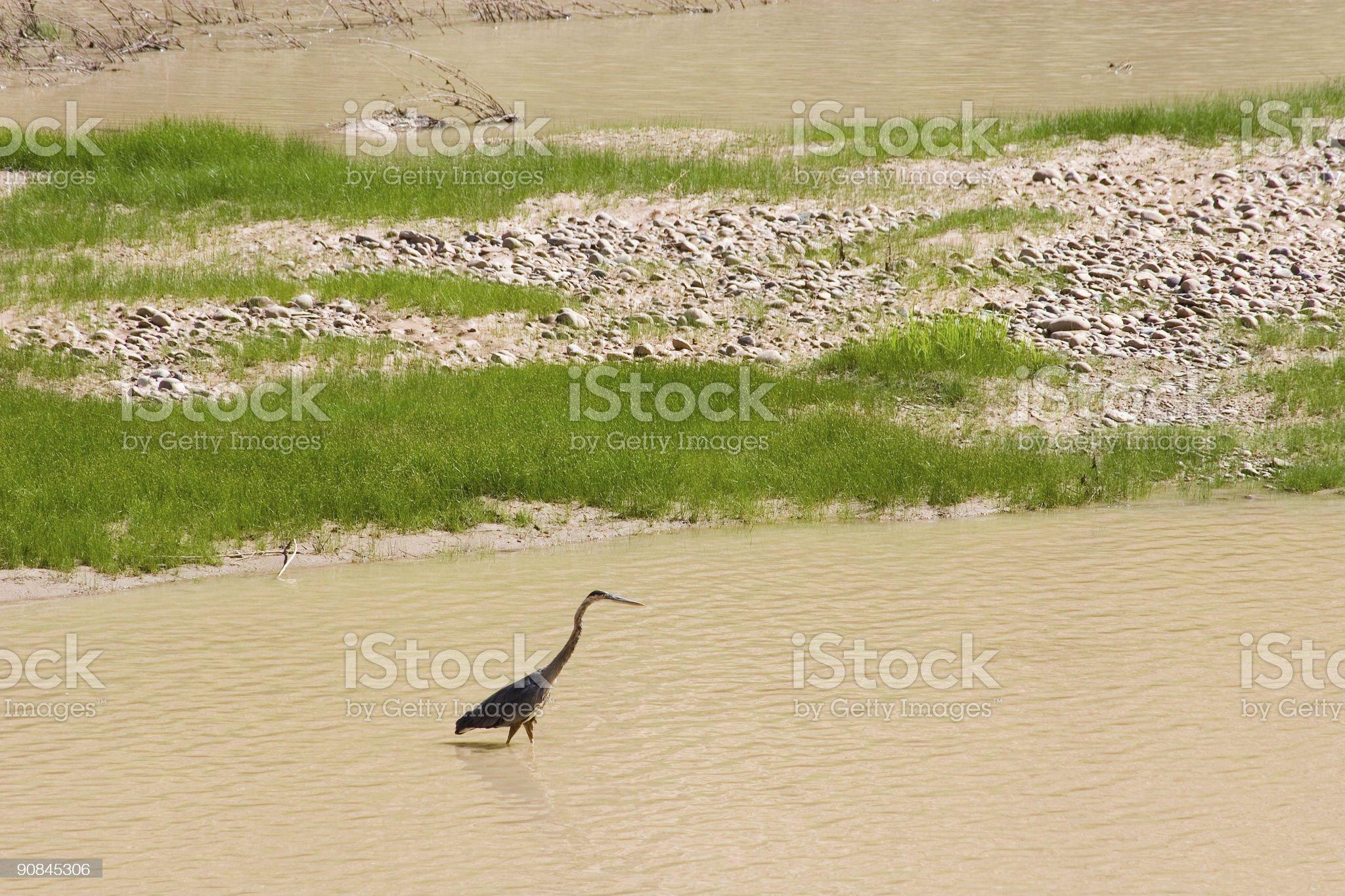 wadingbird1 royalty-free stock photo