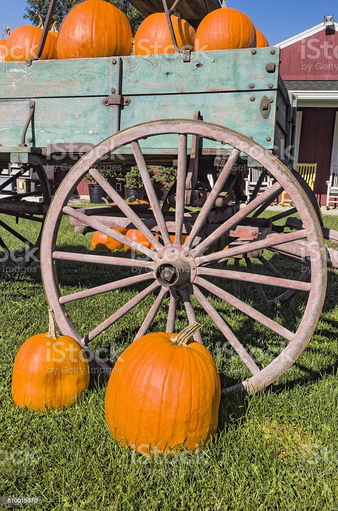 Wagon Filled with Pumpkins stock photo