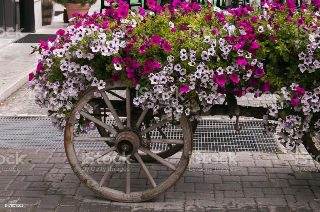 Wagon with beautiful petunia flowers stock photo