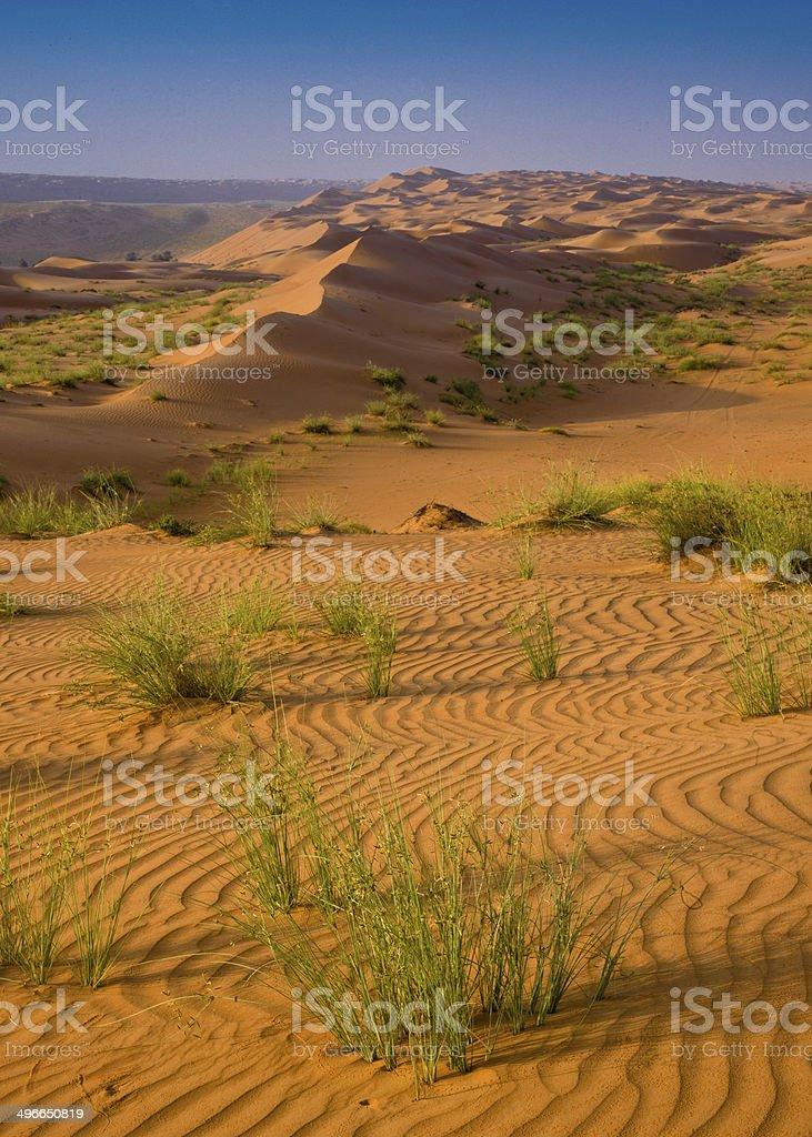 Wahiba desert sands, Oman stock photo