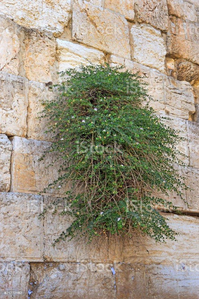 Wailing Wall in Jerusalem, Israel stock photo