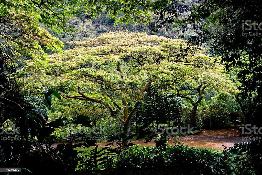 Waimea Valley Tree stock photo