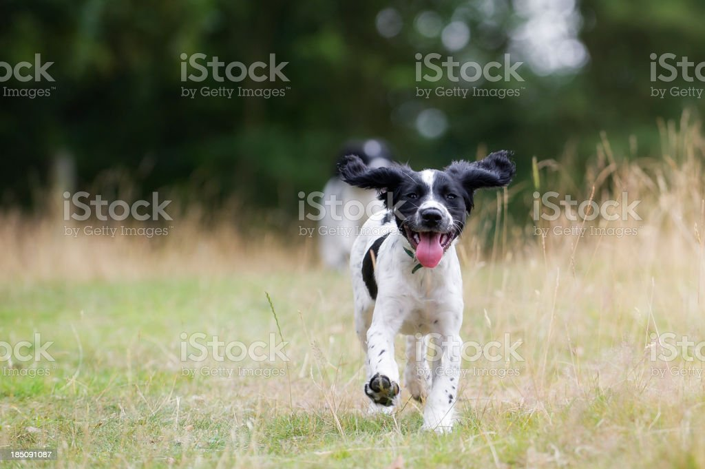 wait for me! stock photo