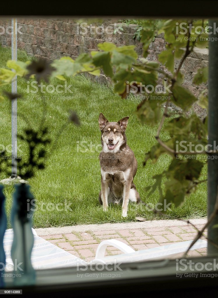 Waiting Dog royalty-free stock photo