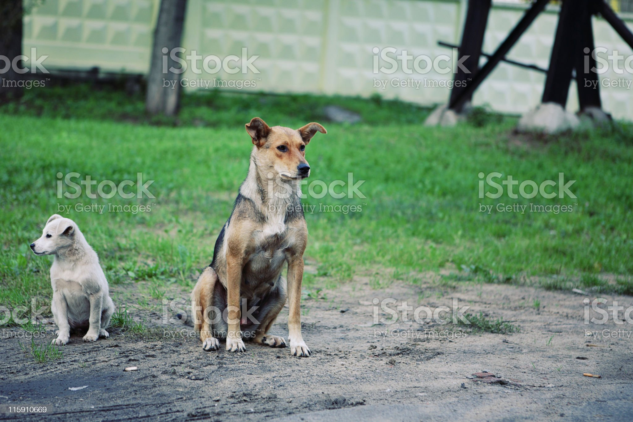 waiting dogs royalty-free stock photo