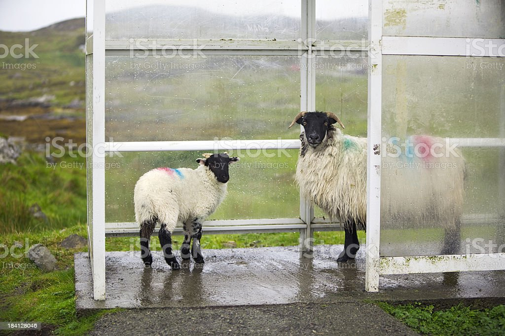 Waiting for a bus!  Outer Hebrides, Scotland stock photo