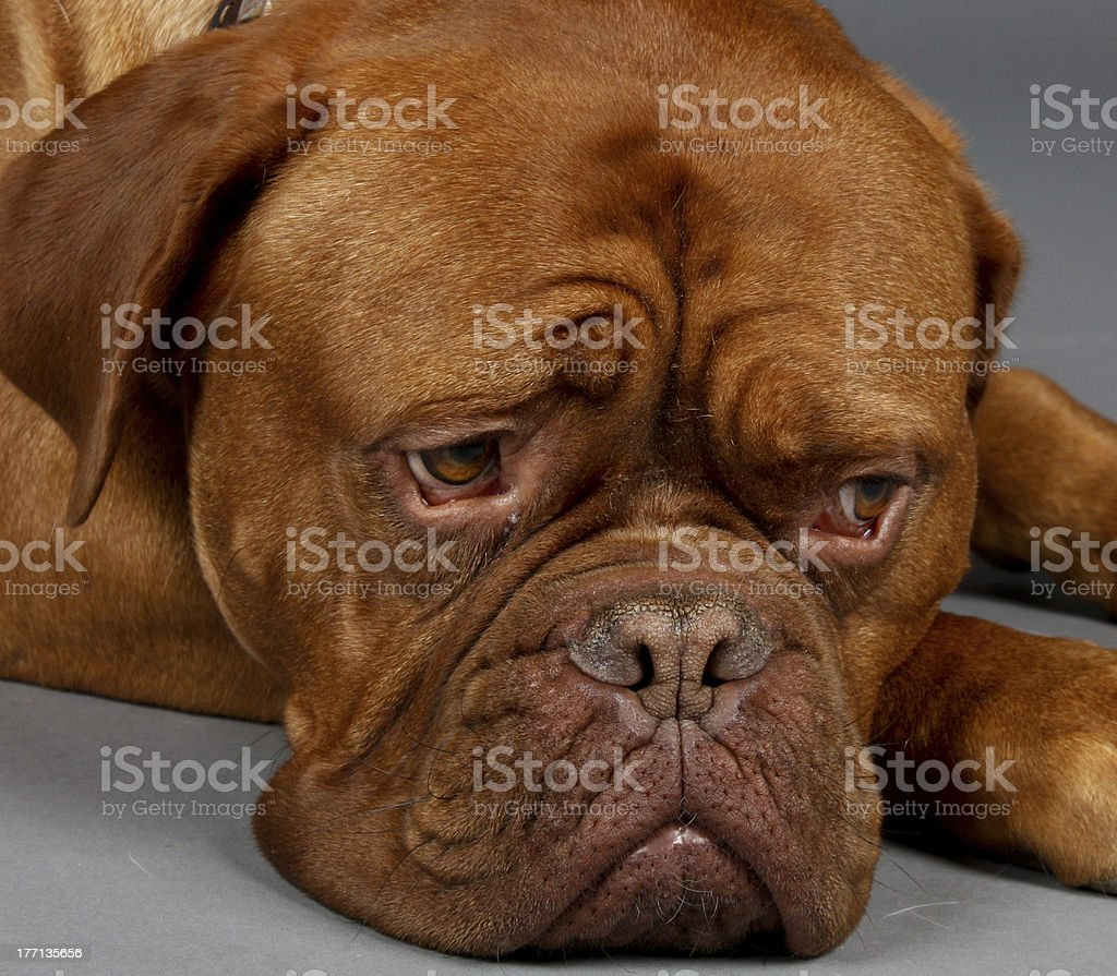 Waiting For Dogot royalty-free stock photo