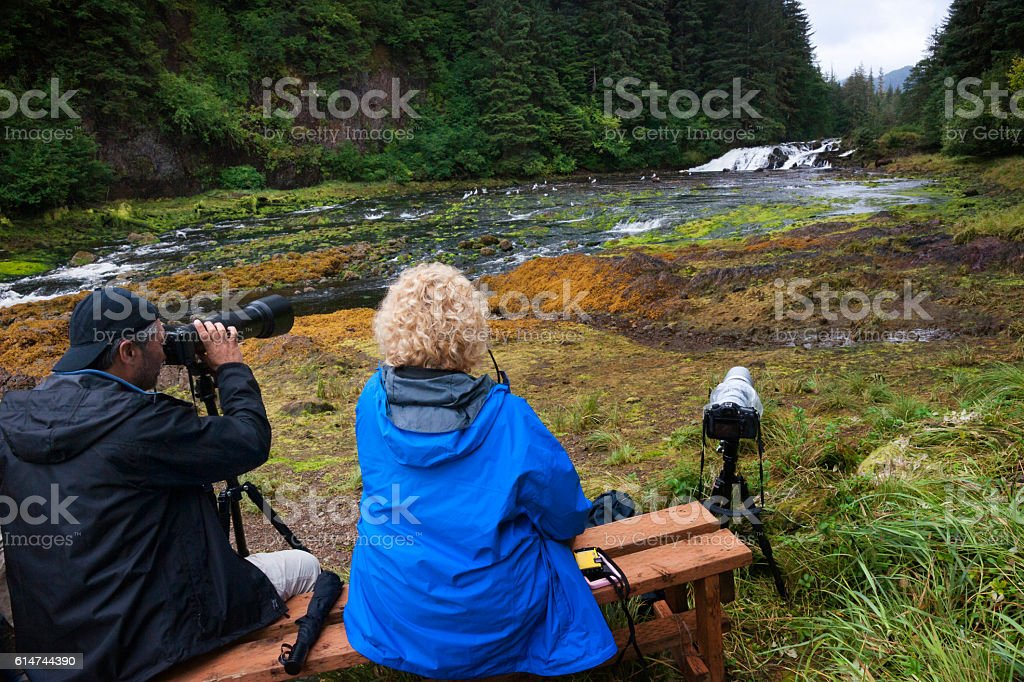 Waiting for grizzly bears stock photo