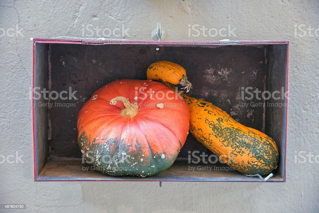 Aspettando Halloween stock photo