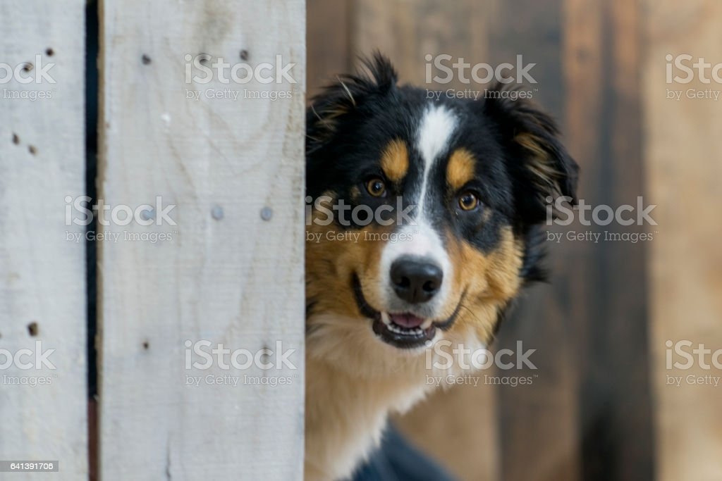 Waiting for his Human stock photo