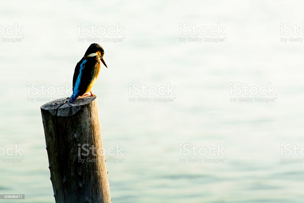 Waiting for prey royalty-free stock photo