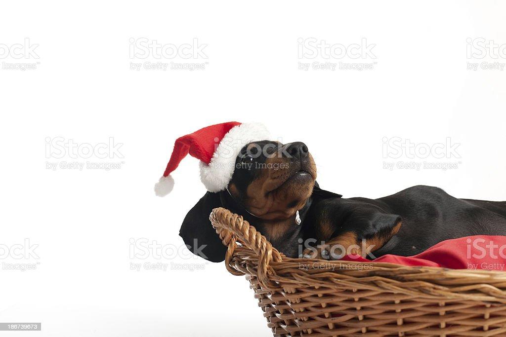 Waiting for Santa Claus royalty-free stock photo