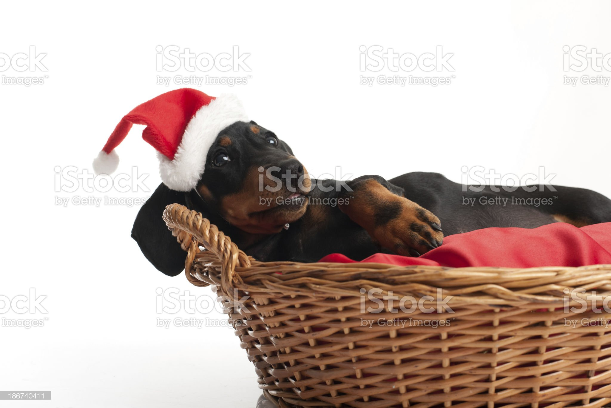 Waiting for Santa Claus royalty-free stock photo