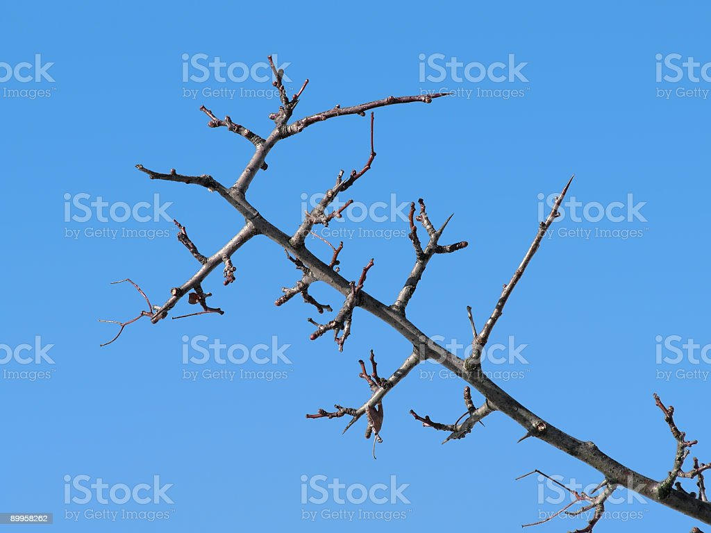 Waiting for spring royalty-free stock photo