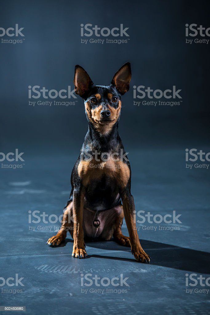 Waiting for your command stock photo