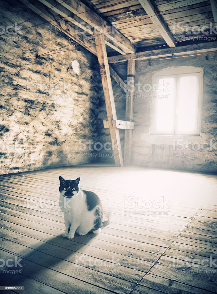 Waiting in the attic stock photo