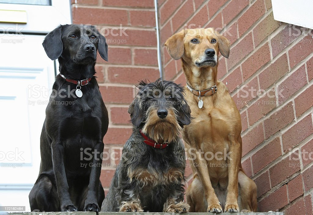 waiting patiently royalty-free stock photo