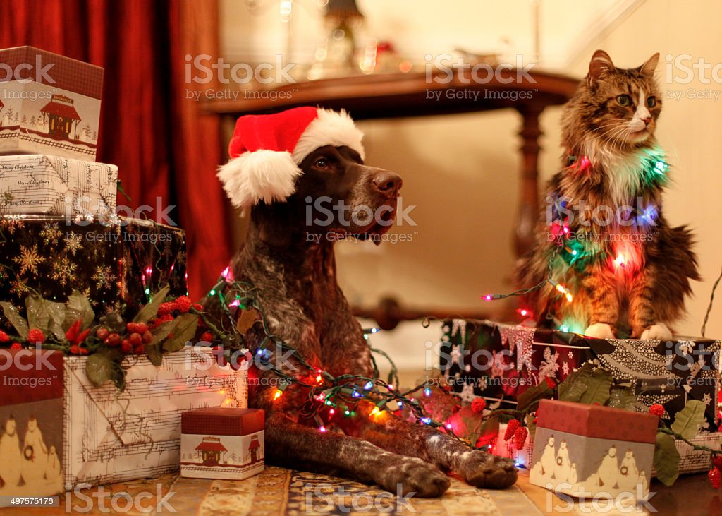 Waiting to open presents. stock photo