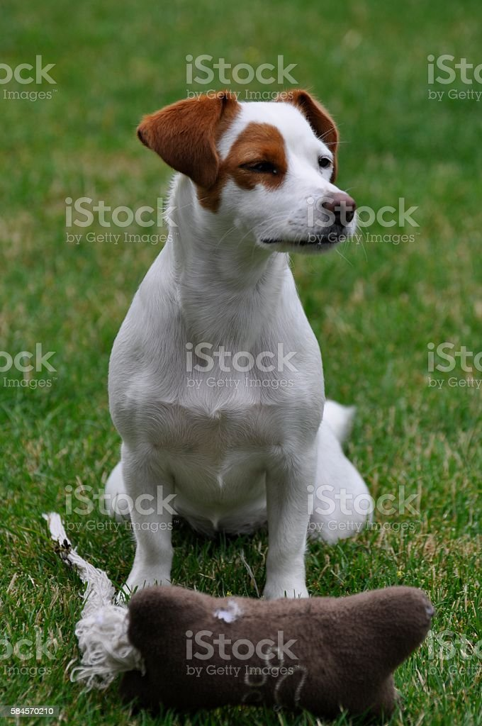 Waitung and Watching Dog stock photo