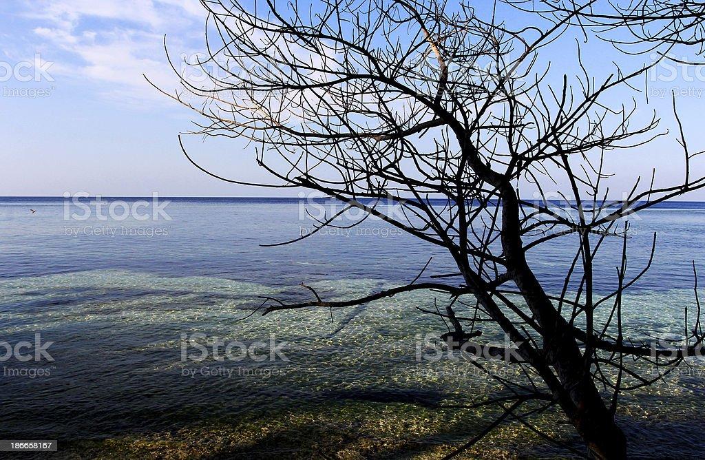Wakatobi Beach stock photo