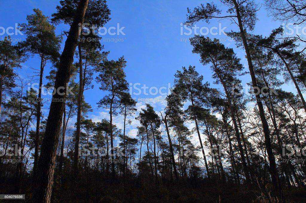 Wald auf Anhöhe stock photo