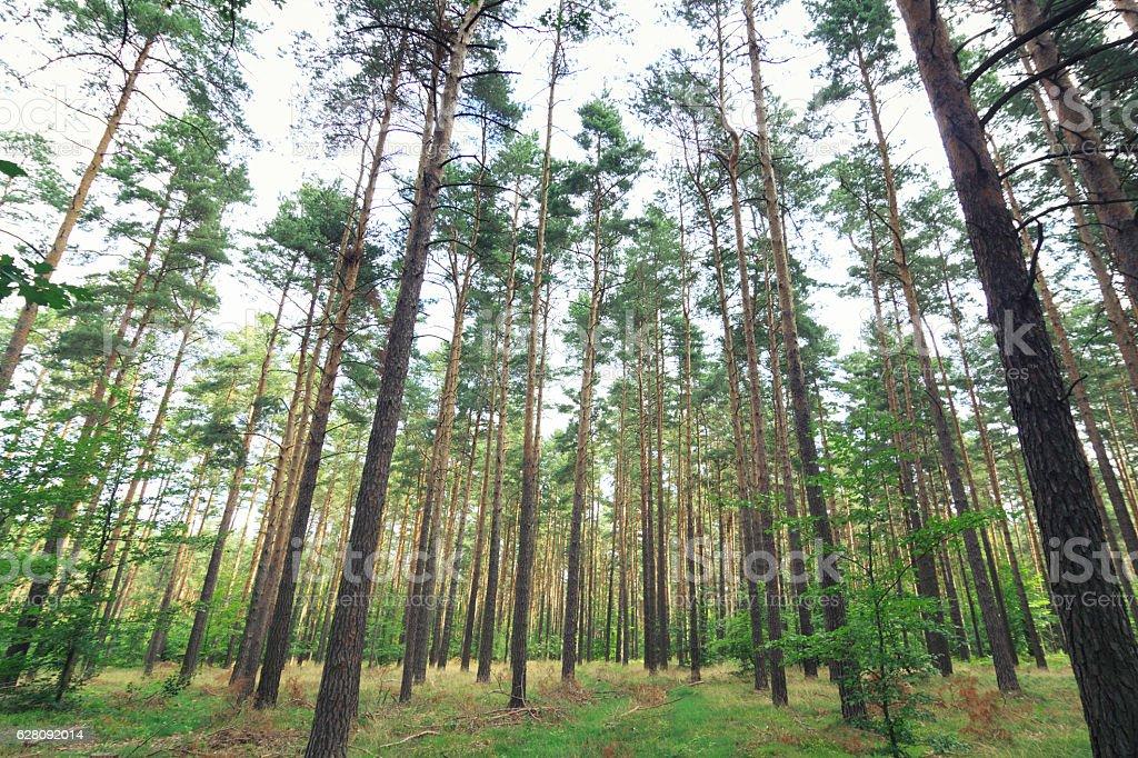 Wald in der Oberlausitz stock photo