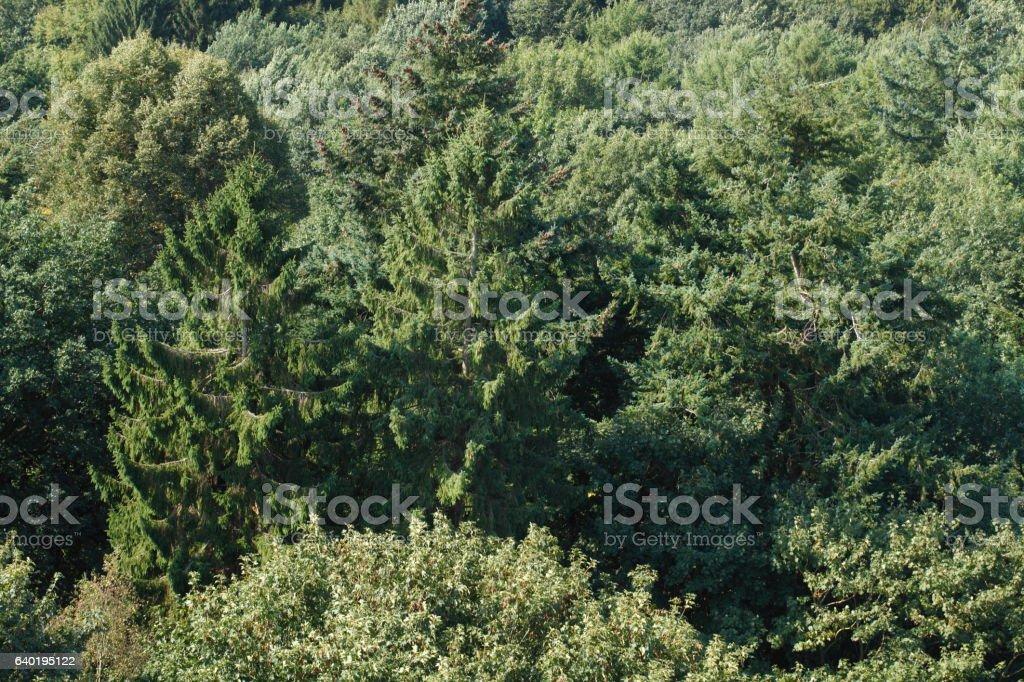 Wald stock photo