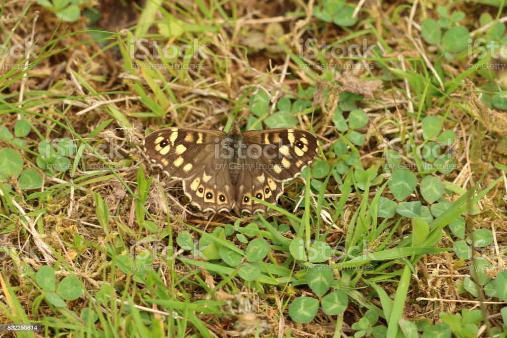 Waldbrettspiel stock photo