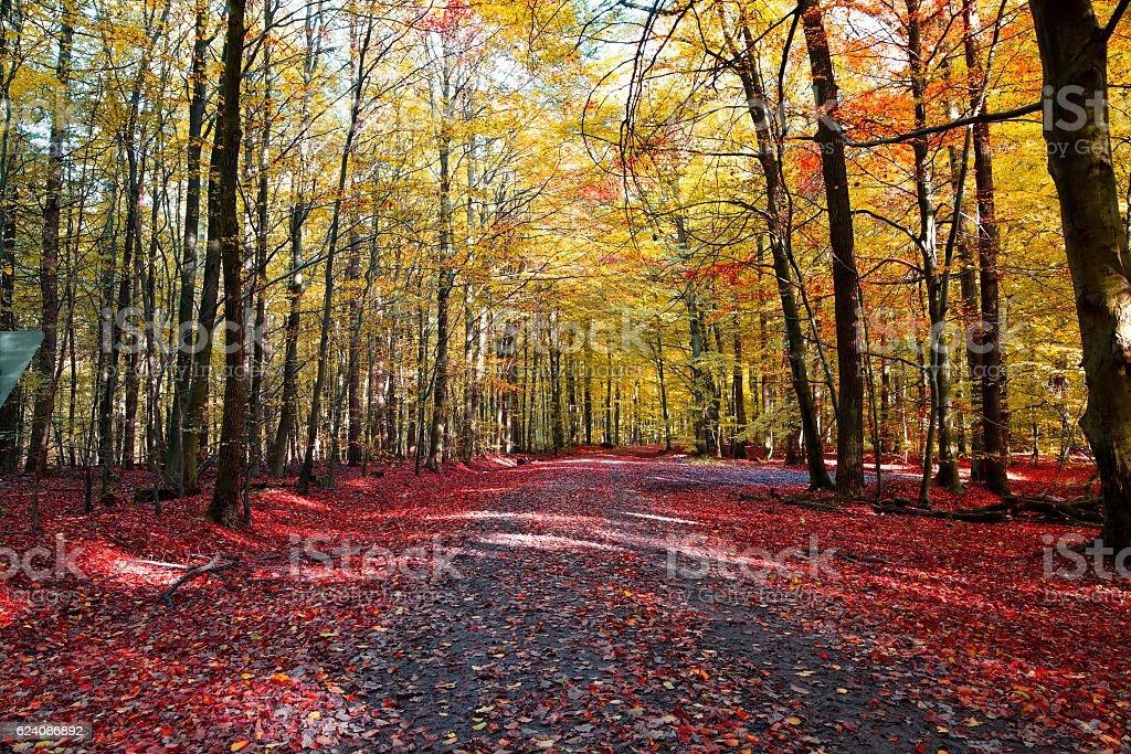 Waldweg im herbstlichen Buchenwald. stock photo