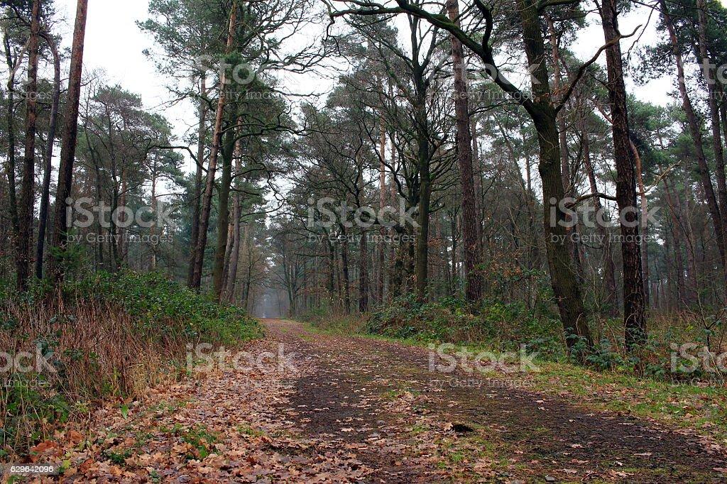 Waldweg stock photo
