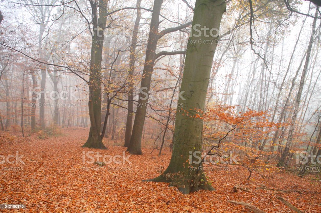 Waldweg11_051.JPG stock photo