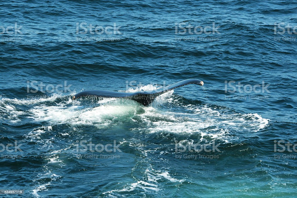 Walfluke stock photo