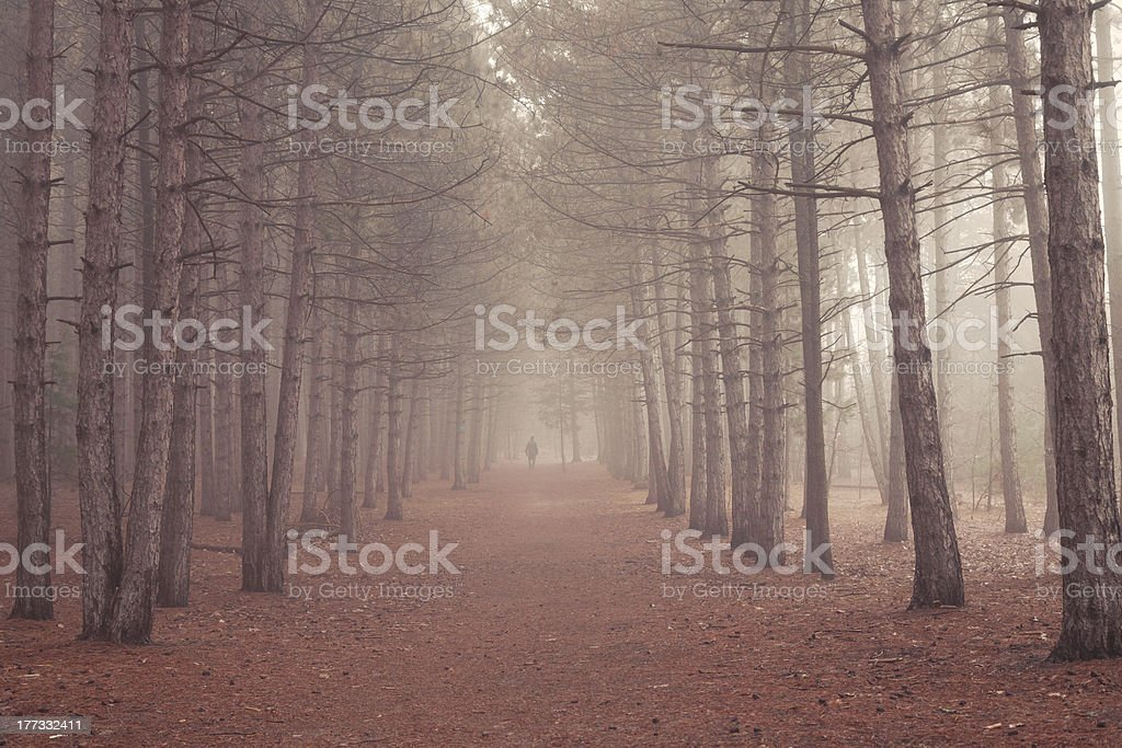 Walk Alone stock photo