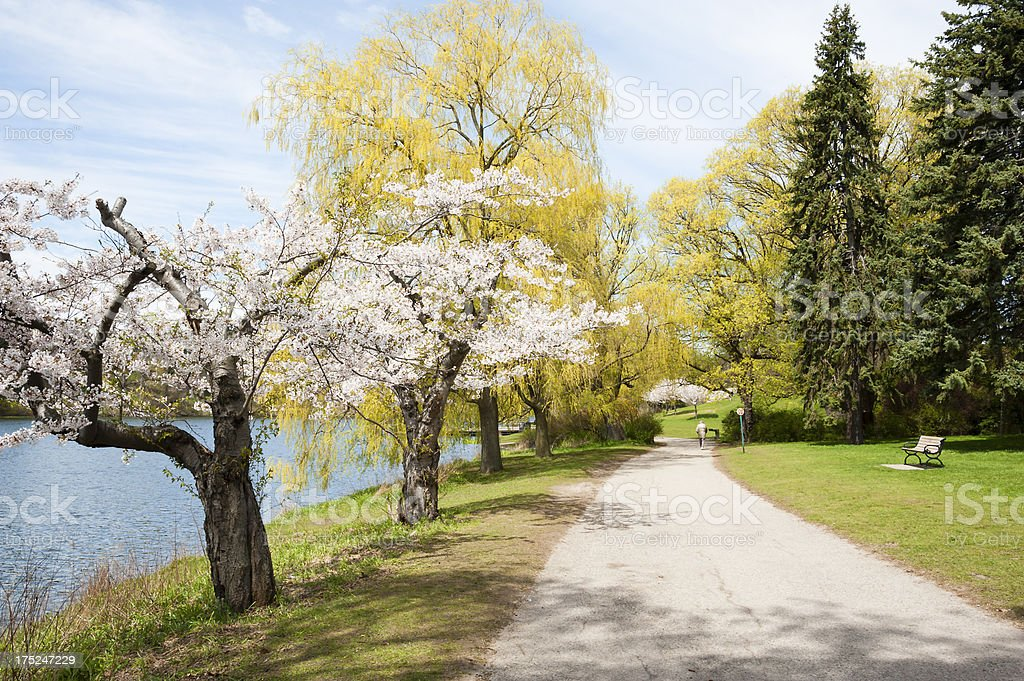 Walk Amongst The Blooming Spring Trees stock photo