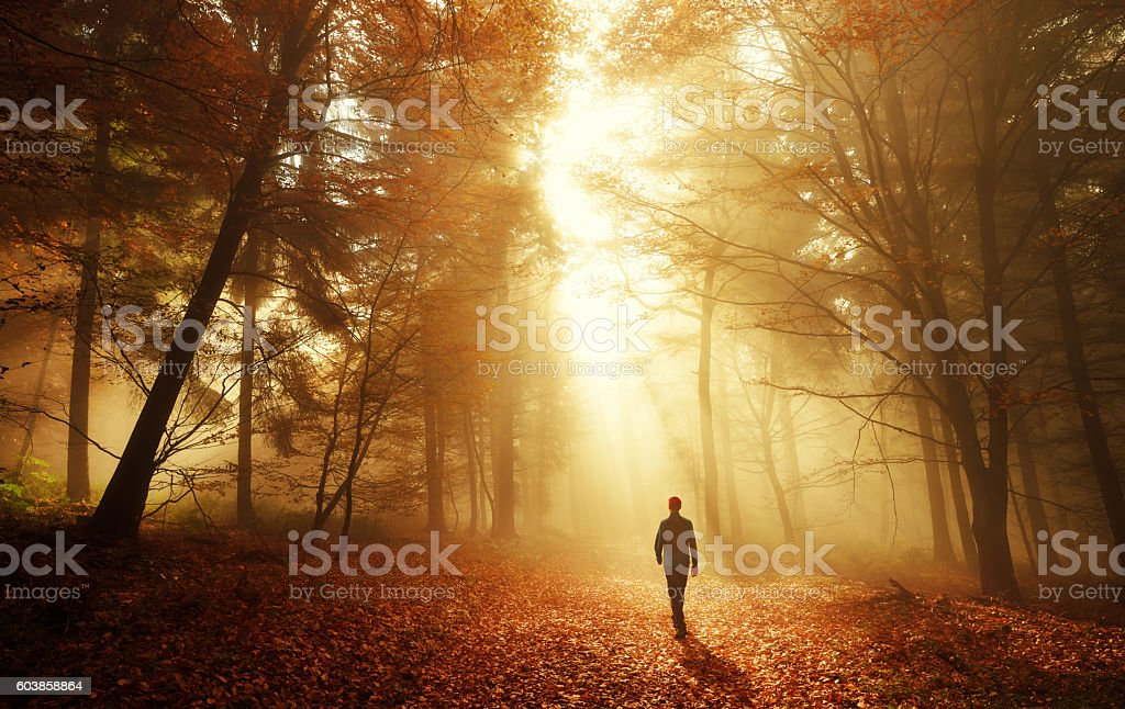Walk in breathtaking light of the autumn forest stock photo