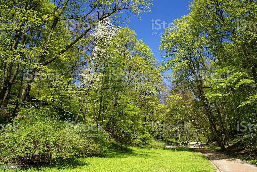 Walk in park royalty-free stock photo