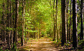 Walk in the Enchanting Woodland