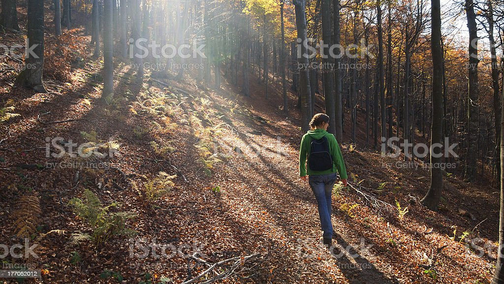 Walk in the forest royalty-free stock photo