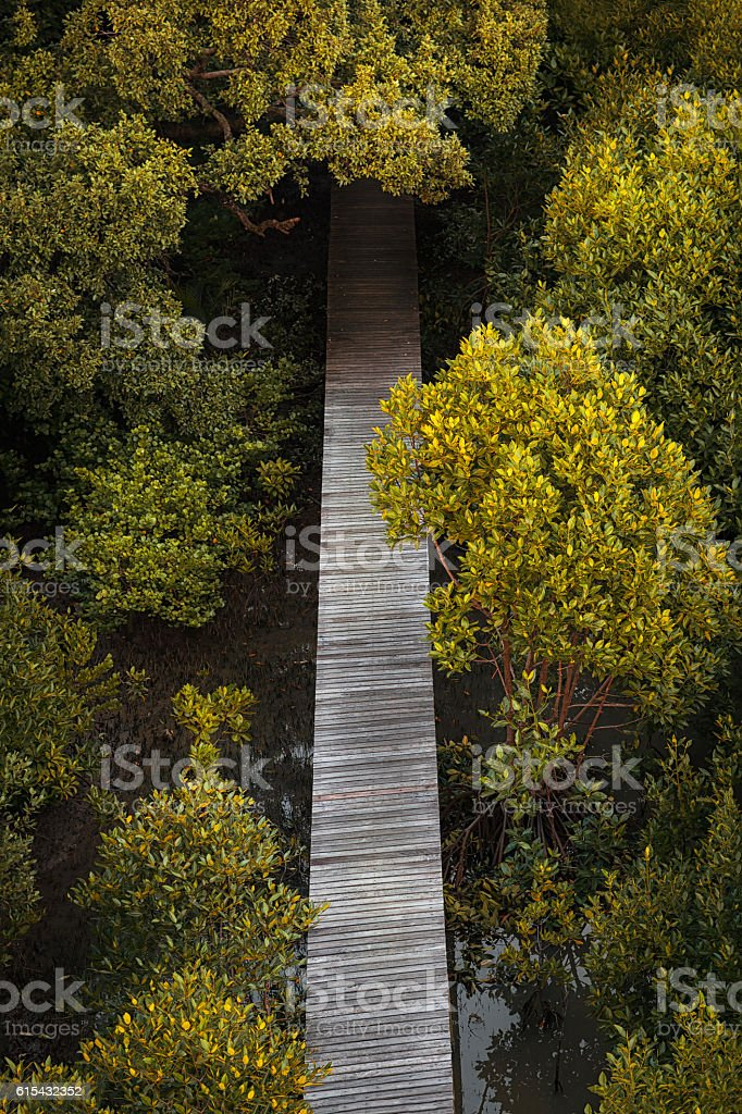 Walk in the mangrove forest stock photo