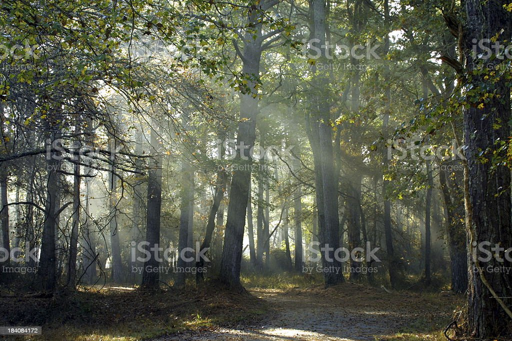 Walk in the woods stock photo